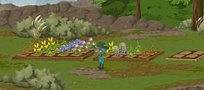 rainbow garden!