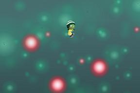 Plexus Dive