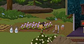 Backyard - Herb Garden
